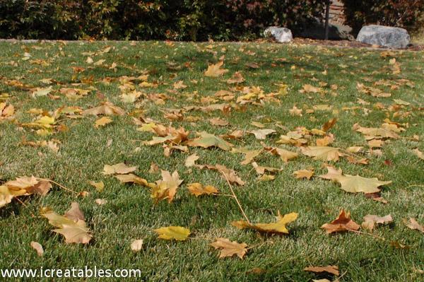 fall-lawn
