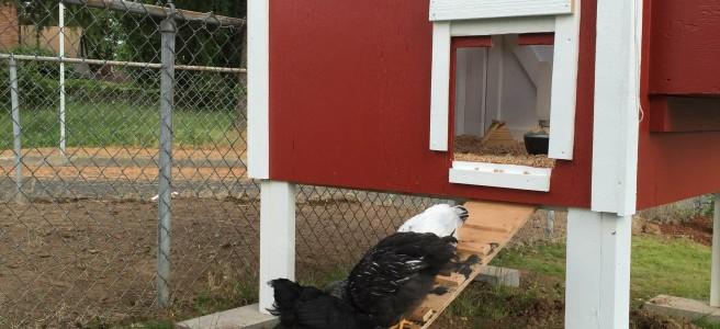 4x4-CCLT-chicken-coop-plans-ramp-portland-or