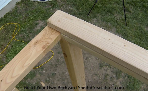 How to build shed walls installing top plates