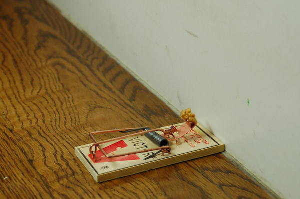 mouse trap set by wall