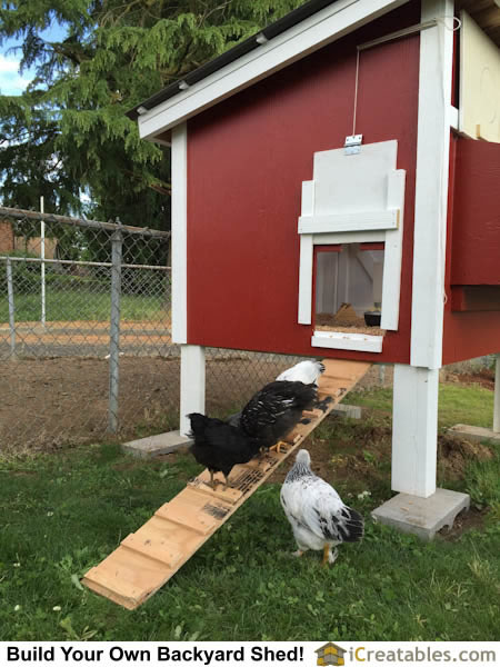 Chicken ladder so chickens can enter chicken coop door.